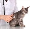 Ветеринарные клиники в Изоплите